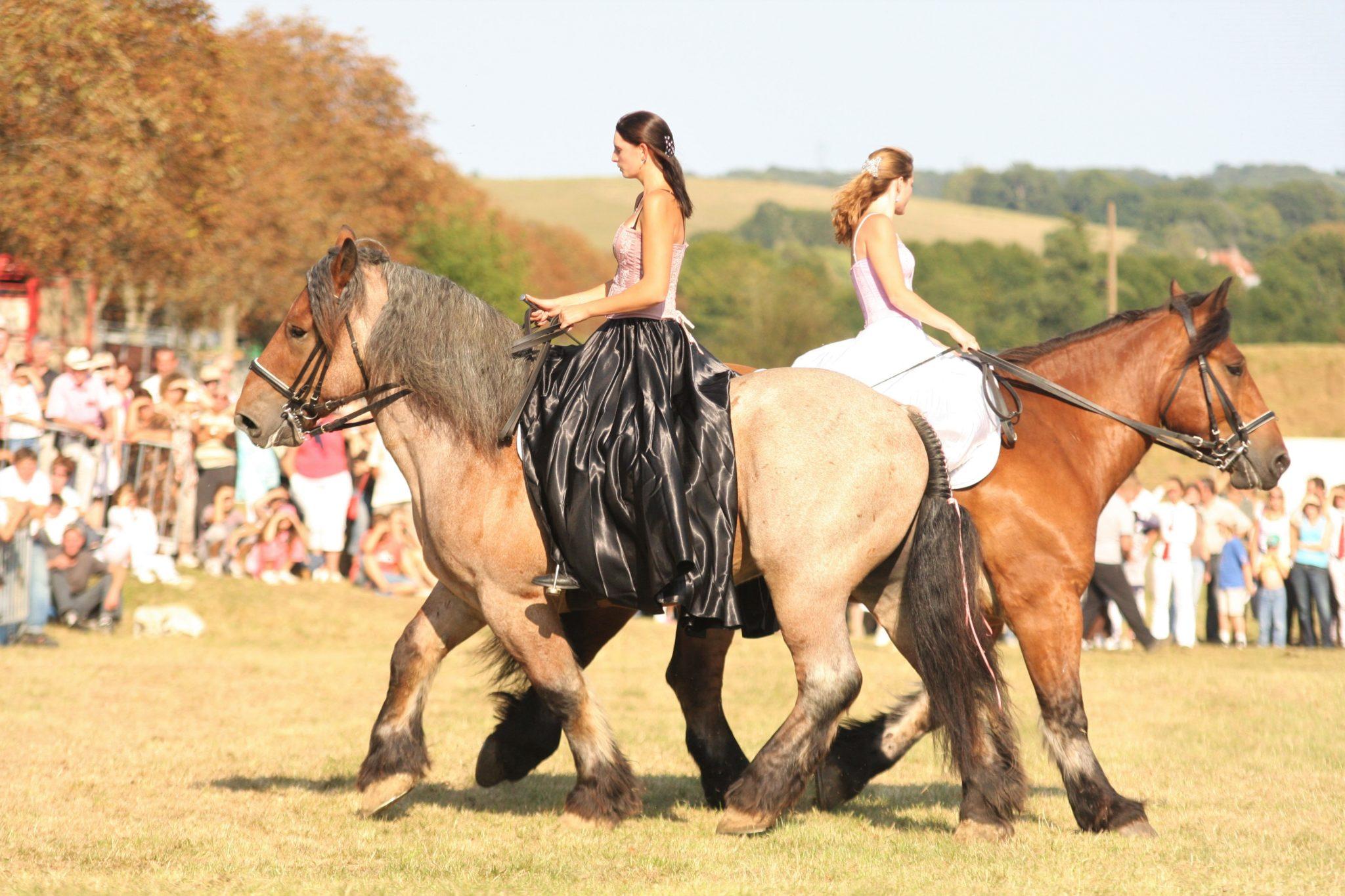 Horse Breed: Auxois - Globetrotting horse riding holidays