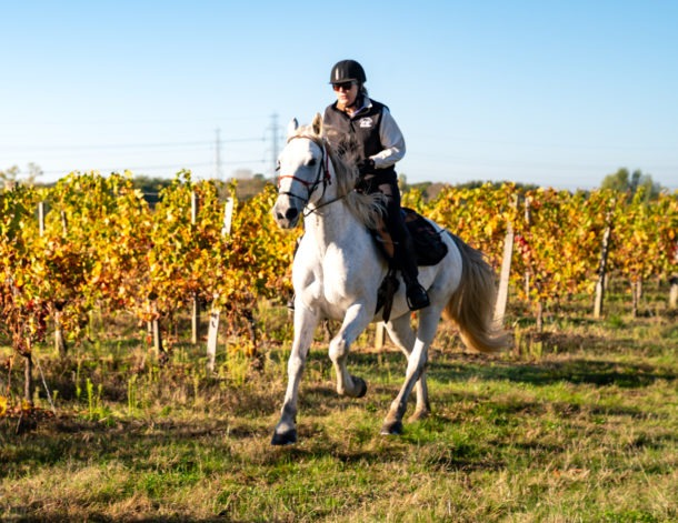 Bordeaux Wine Trail, France - Globetrotting horse riding holidays