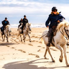horse riding holiday in Camargue, France