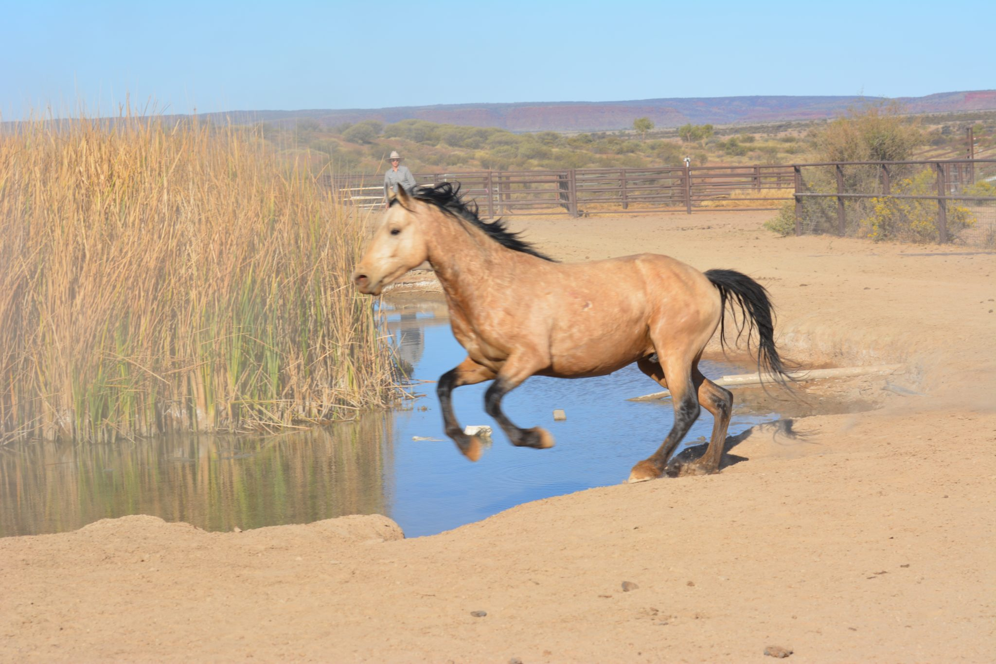Desert brumby safari Australian outback horse riding holiday
