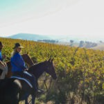 riding through vineyard on barossa horse riding holiday by globetrotting