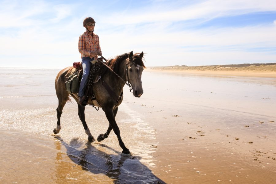 horse riding holiday New Zealand North Island, Twin Coast Adventure with Dromgool Horsemanship