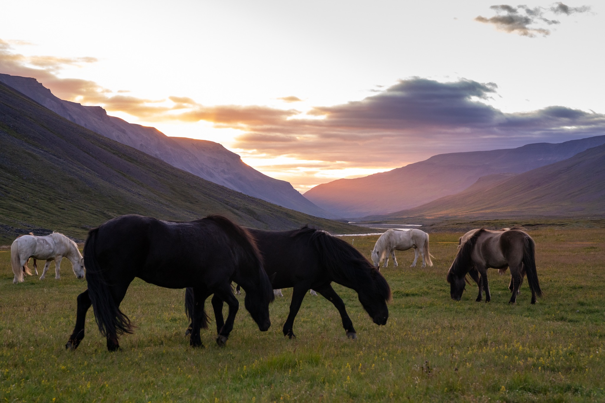 horse riding holiday in Iceland Wilderness Expedition