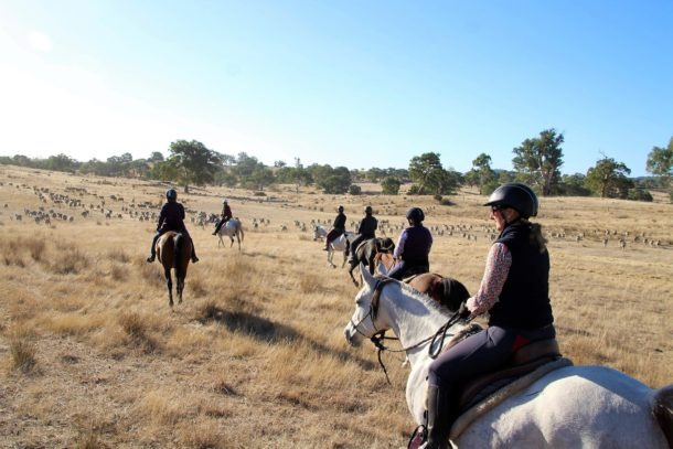 horse riding holiday Grape Horse Adventure Globetrotting Barossa Valley South Australia