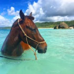 swimming horse in tropical sea riding holiday Indonesia by globetrotting