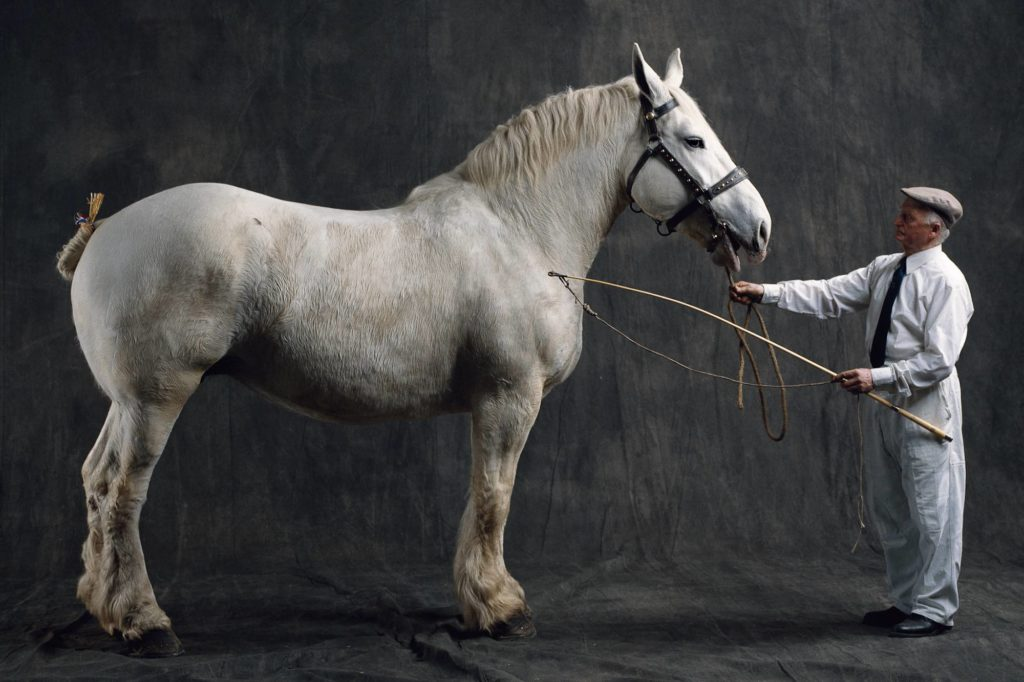 Horse Breed: Boulonnais - Yann Arthus-Bertrand - Globetrotting horse riding holidays