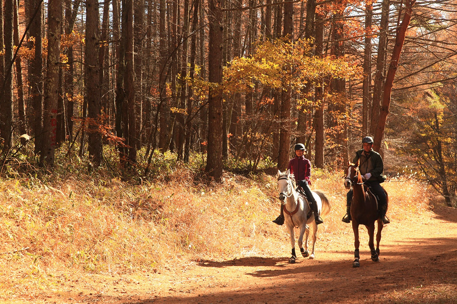 riders in forest horse riding holiday Japan by globetrotting