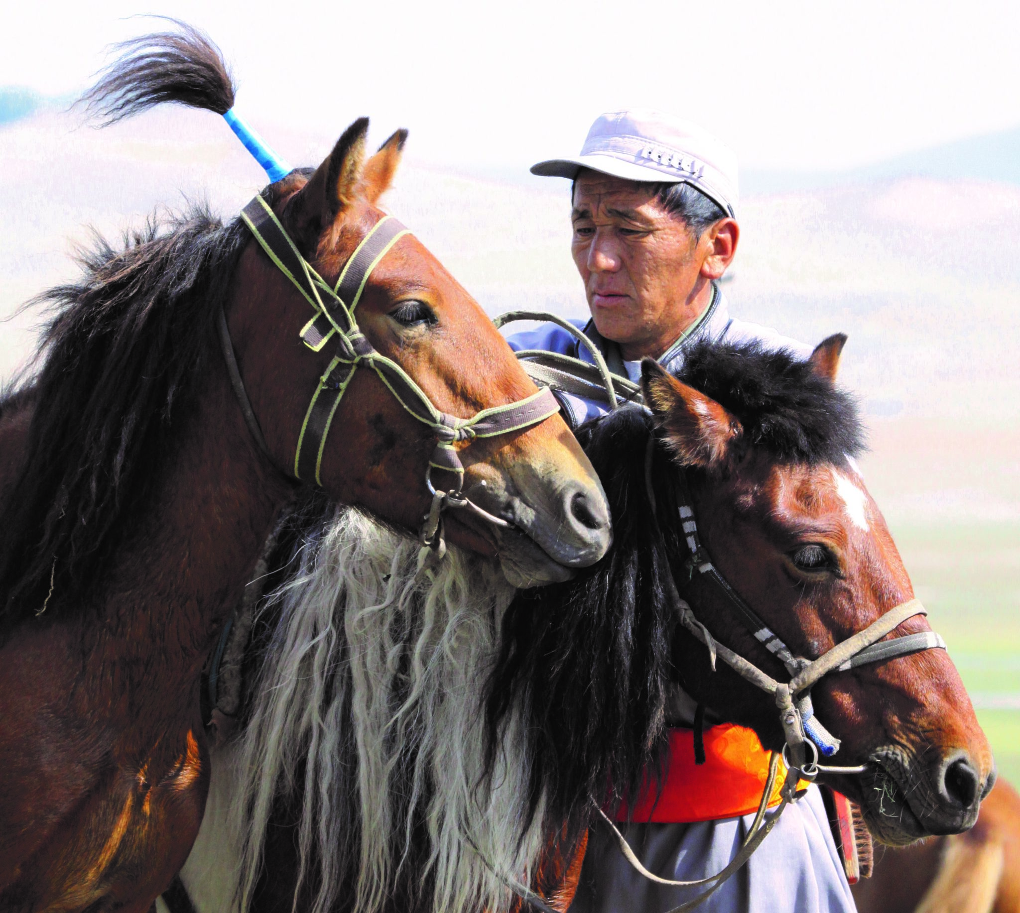Globetrotting horse riding holiday Mongolia horse breed Mongol