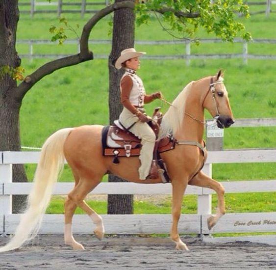 Horse Breed: American Saddlebred - Globetrotting horse riding holidays