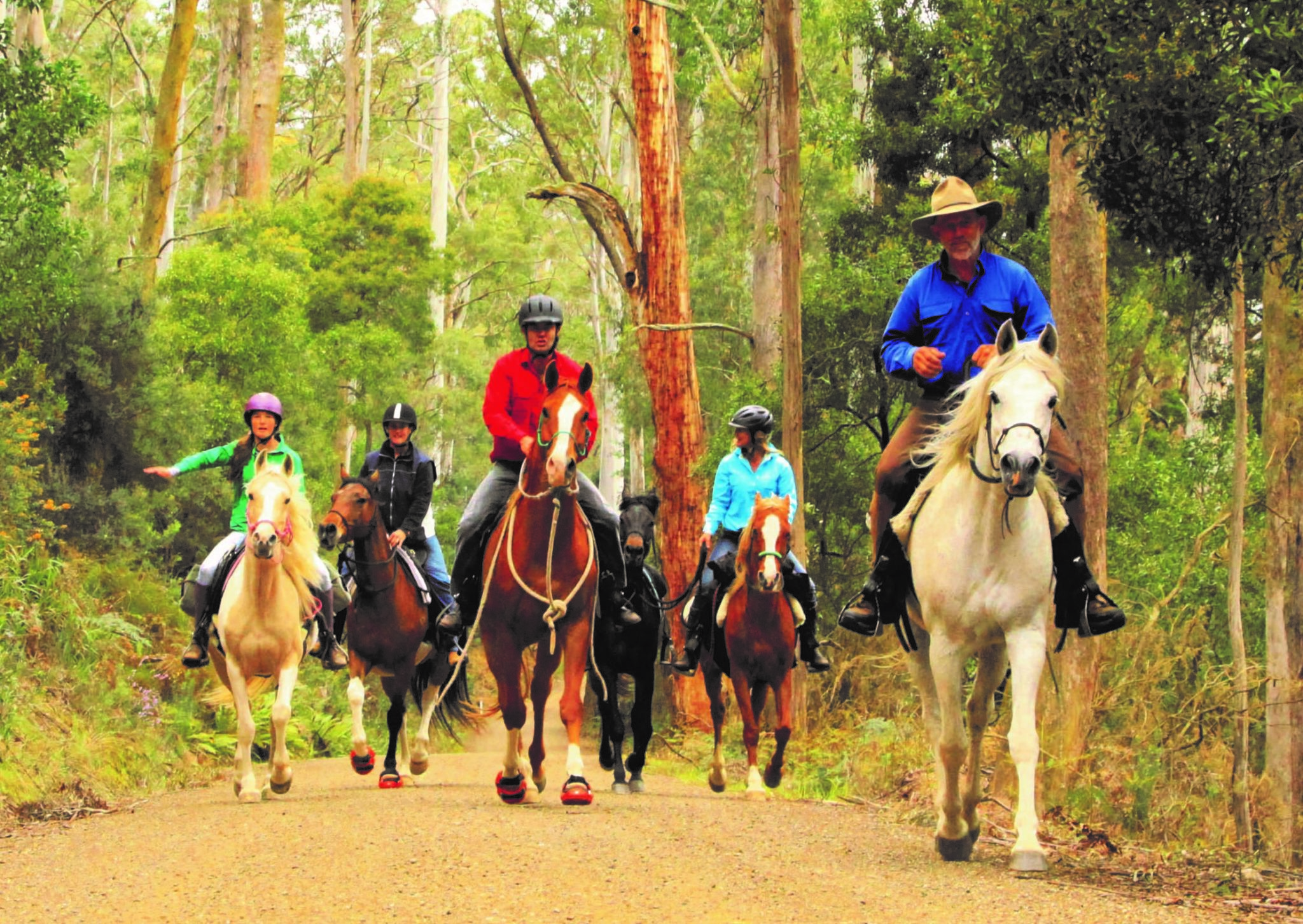 Globetrotting horse riding holiday Tassie Tiger Trail horse breed Arabian