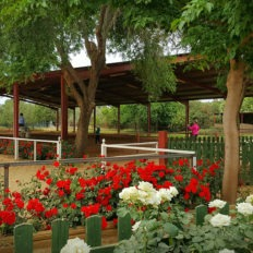 dressage horse riding holiday in Andalusia, Spain