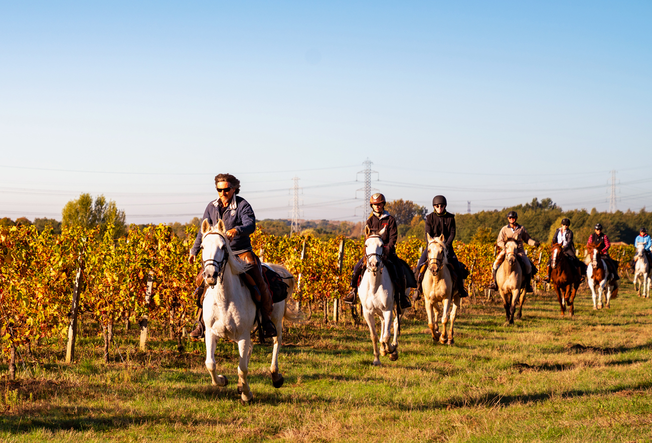 group of riders in vineyard horse riding holiday globetrotting