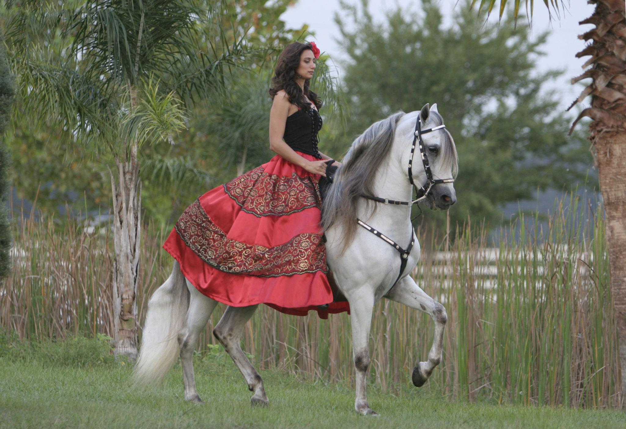 Horse Breed Paso Fino