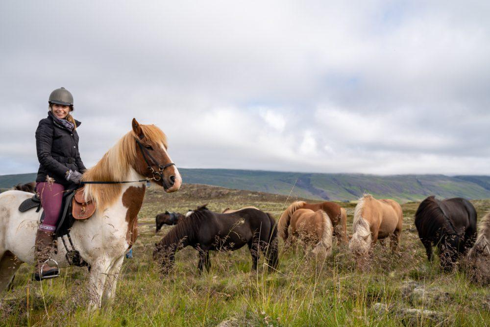 horse riding holiday Iceland