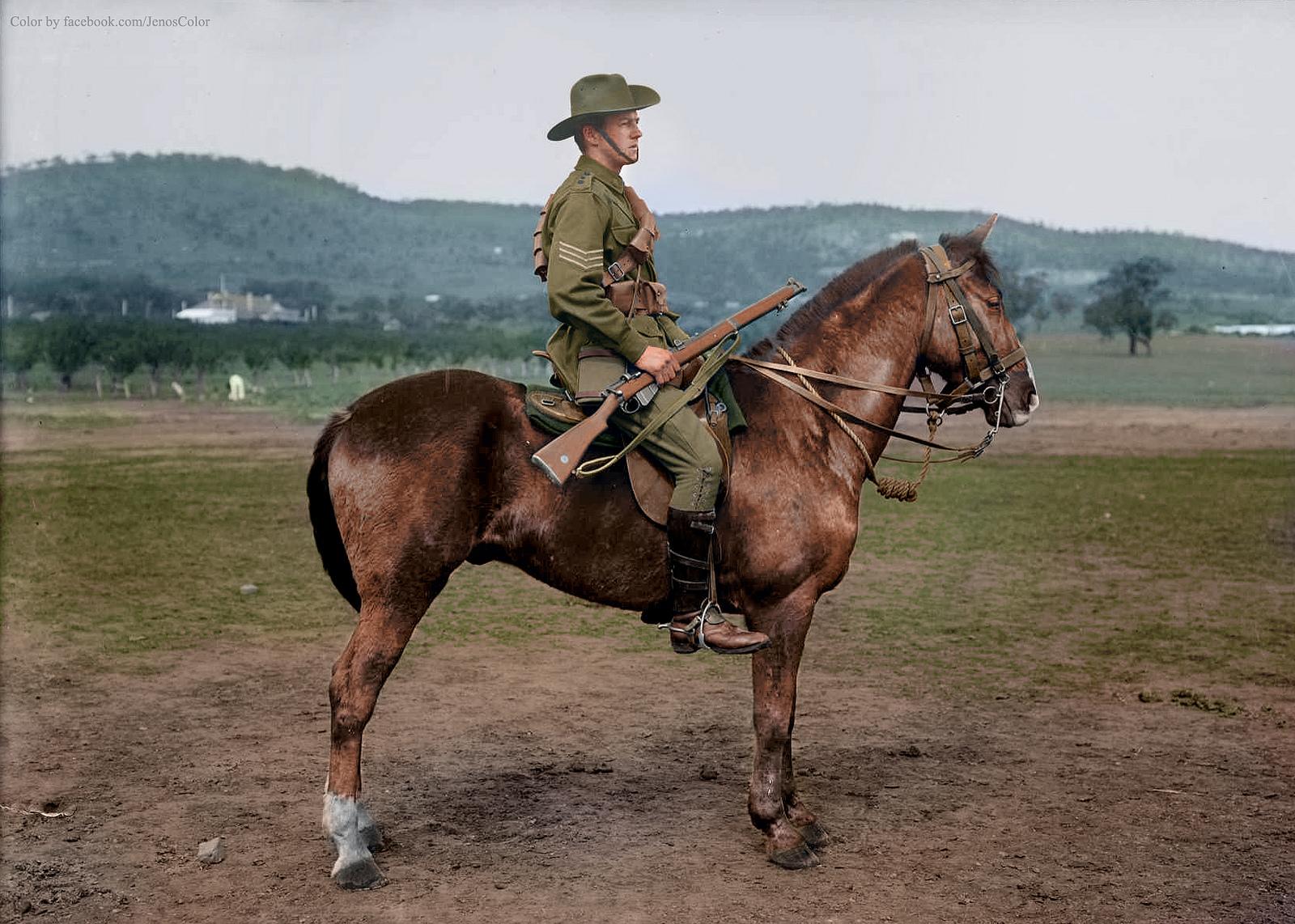 Horse Breed Waler