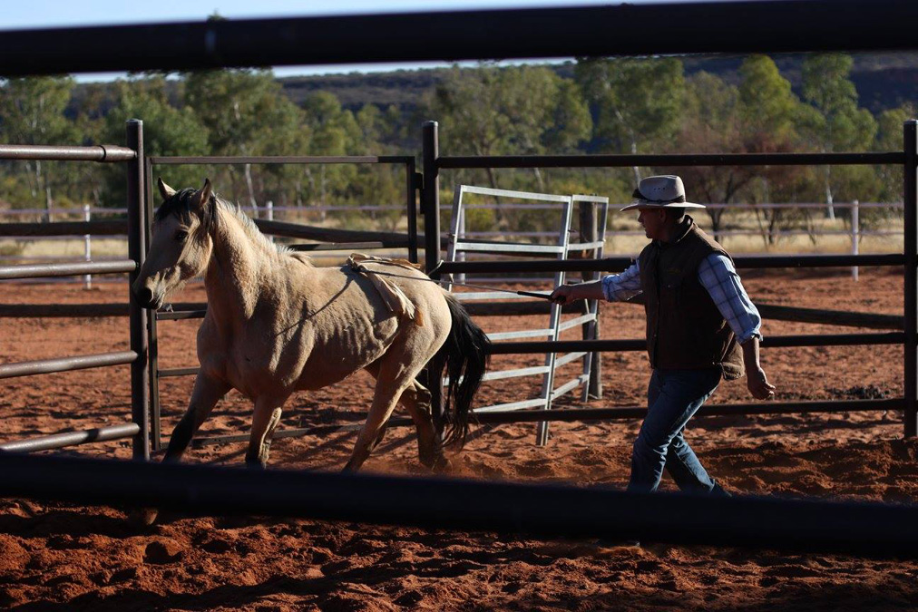 man training a wild horse in arena on Desert Brumby Safari, Australia by Globetrotting