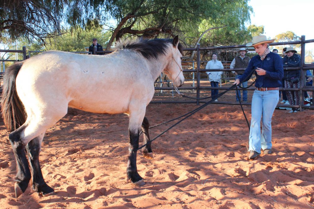 brumby starting experience