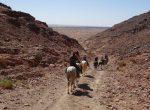 Horse riding Sahara holiday