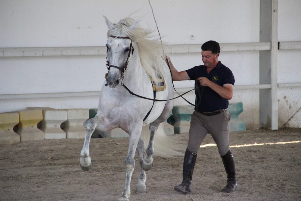 horse riding holiday Andalusia