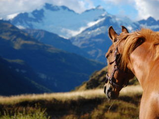 horse riding holiday New Zealand