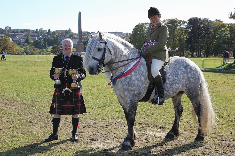 Horse Breed Highland Pony