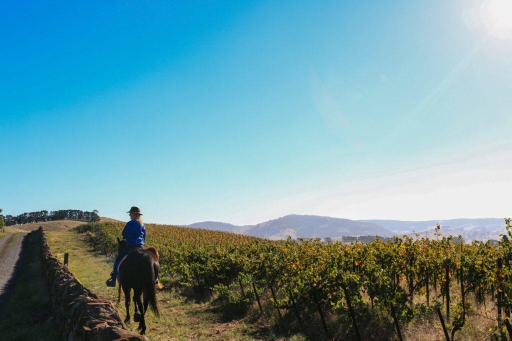 The Grape Horse Adventure, Barossa Valley, South Australia