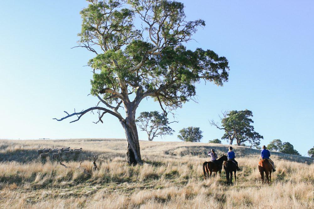 horse riding holiday Barossa Valley