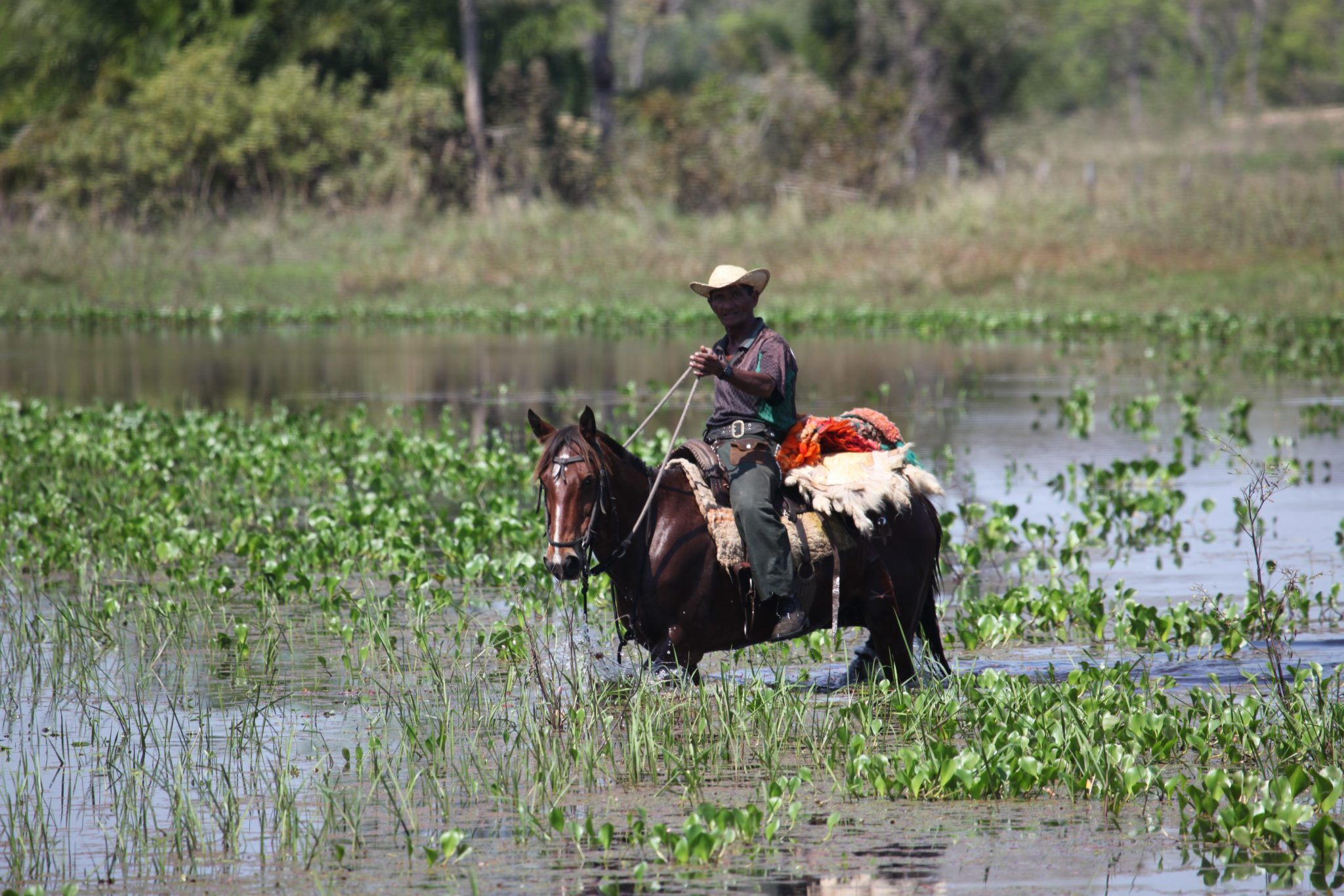 rider in wetland in brazil horse riding holiday by globetrotting