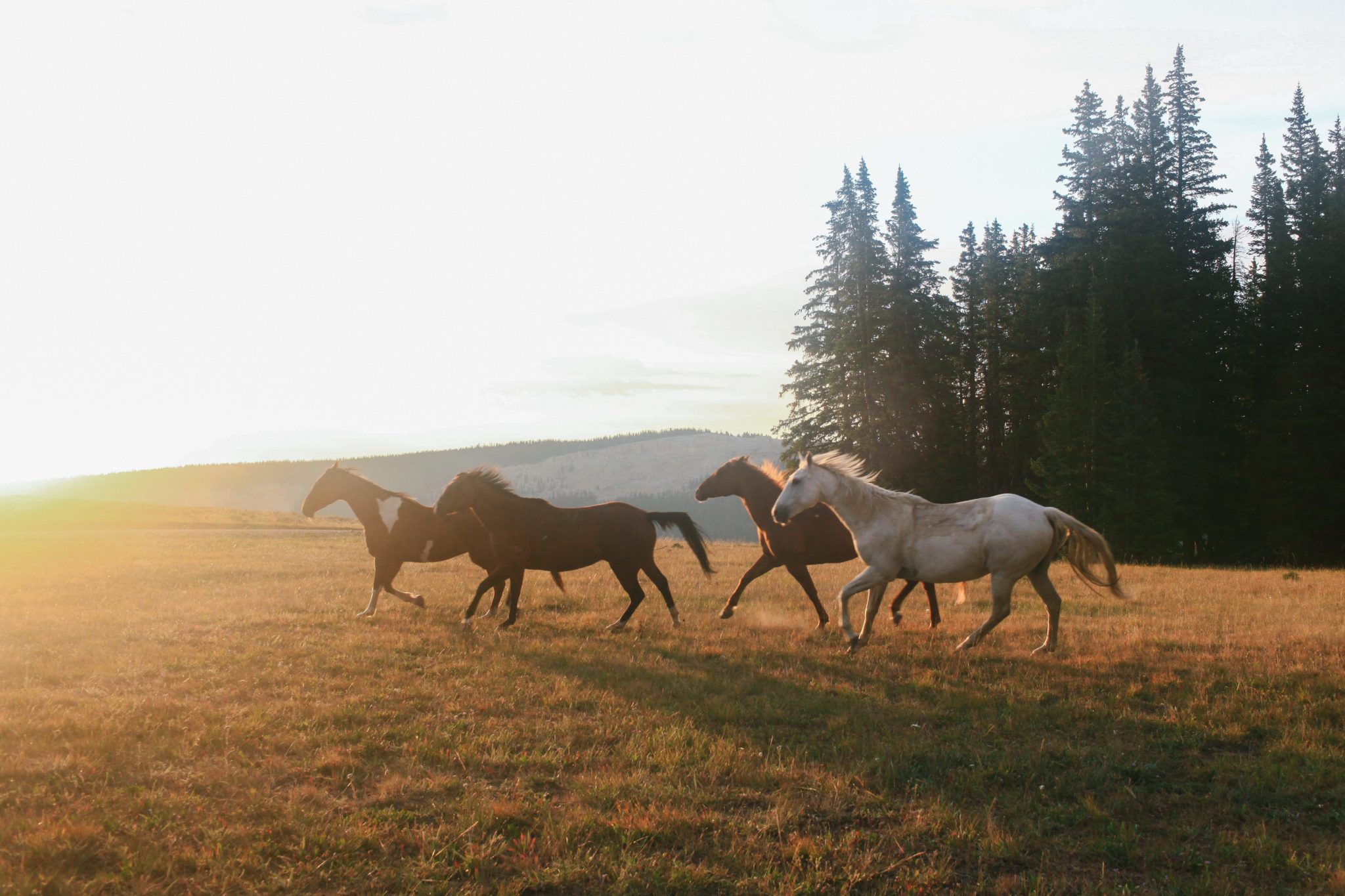 horse riding holiday cattle drive usa
