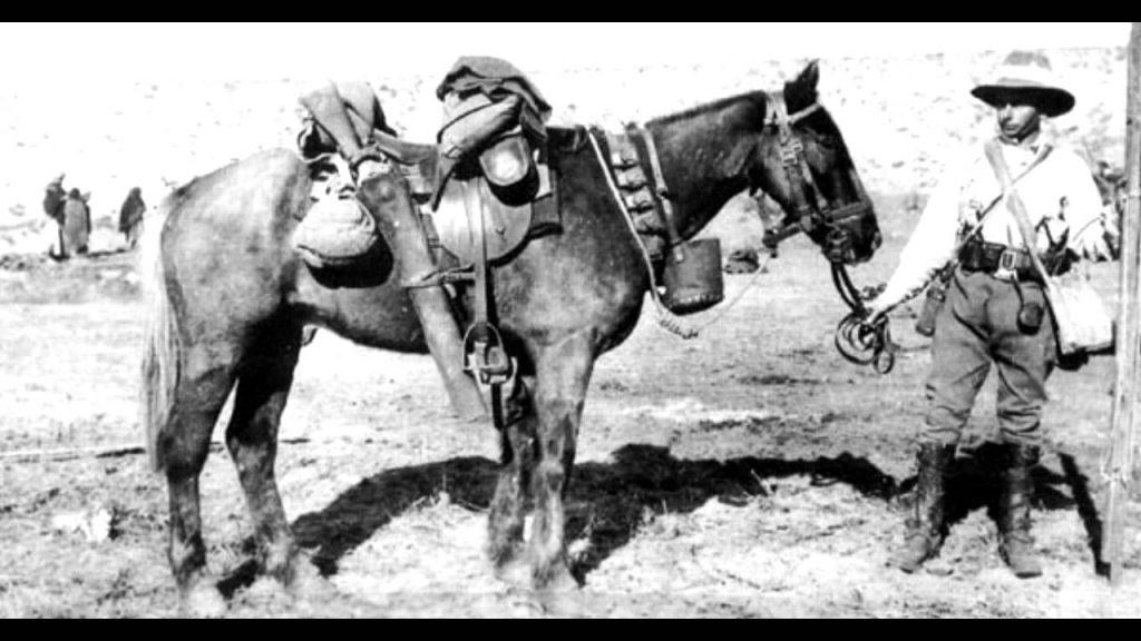 Sandy Australia S Only Returning War Horse
