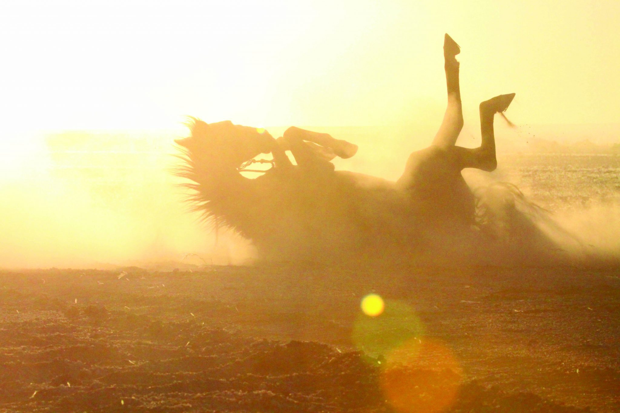 horse rolling in sand desert horse riding safari by globetrotting