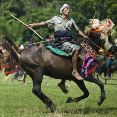 horse riding holiday Sumba