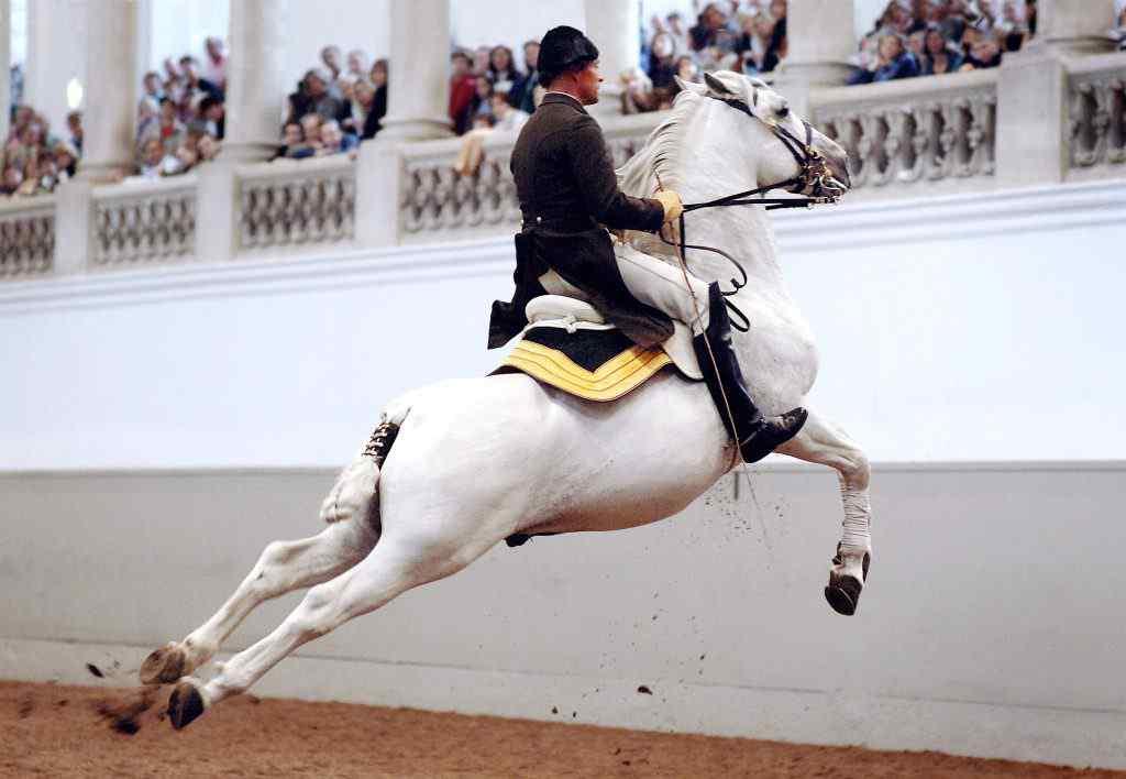 Spanish Riding School in Vienna Spaanse Rijschool in Wenen Spanische Hofreitschule Wien Scuola Spagnola Vienna