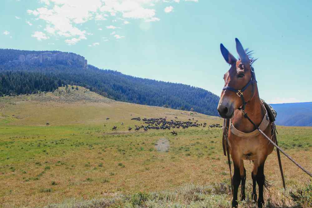 horse riding holiday wyoming