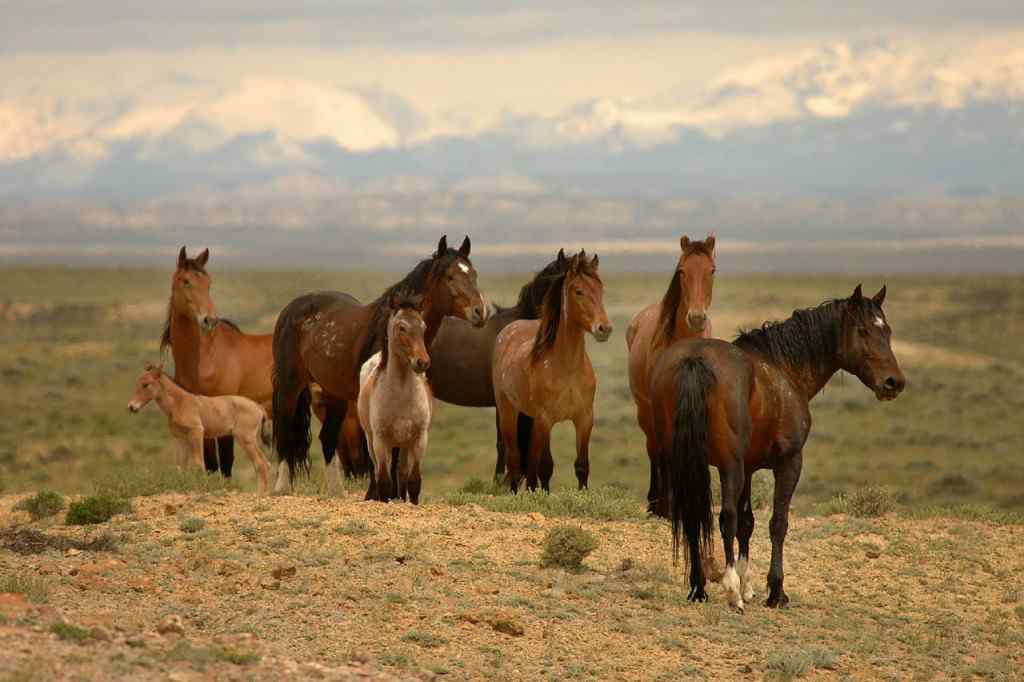 Mustang blog pic