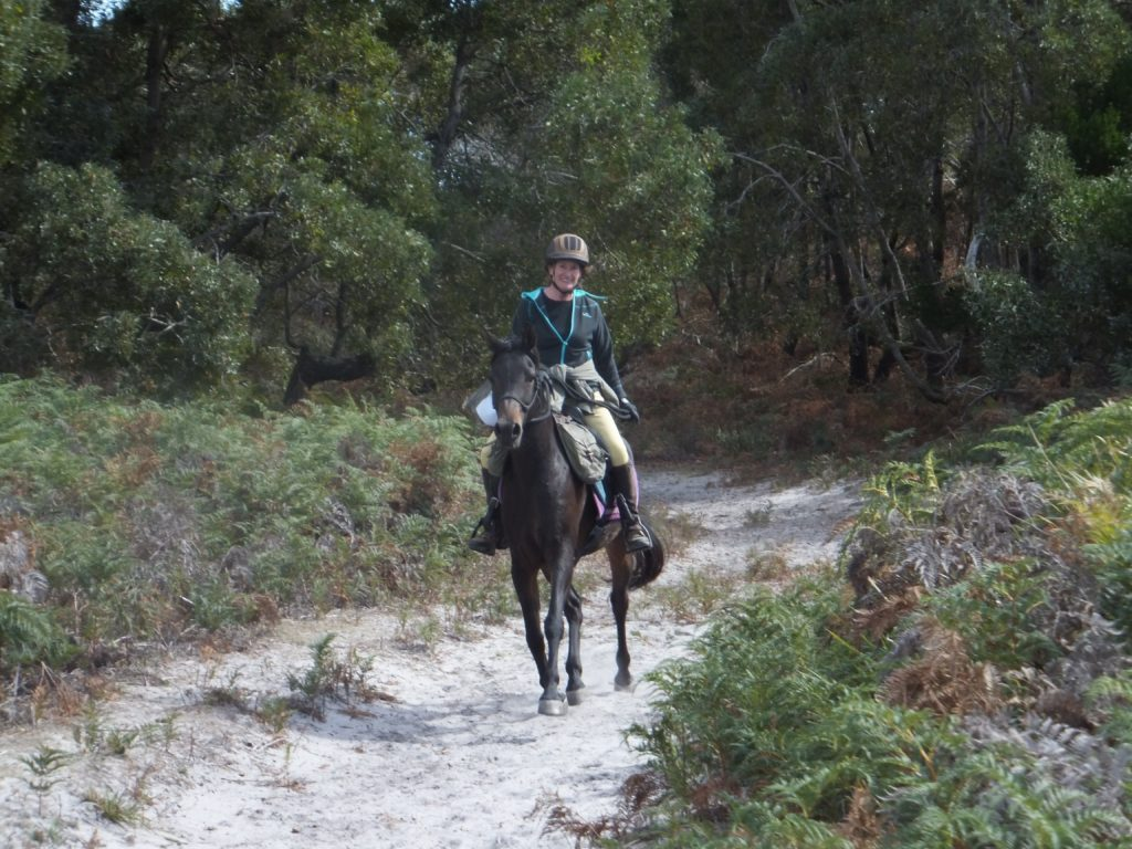 Globetrotting horse riding holiday Tassie Tiger Trail, Australia