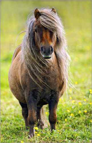 Schöne Ponys
