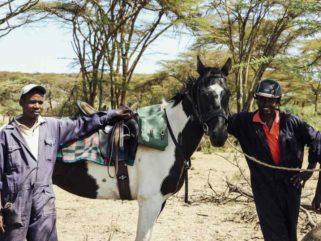 globetrotting guest horse