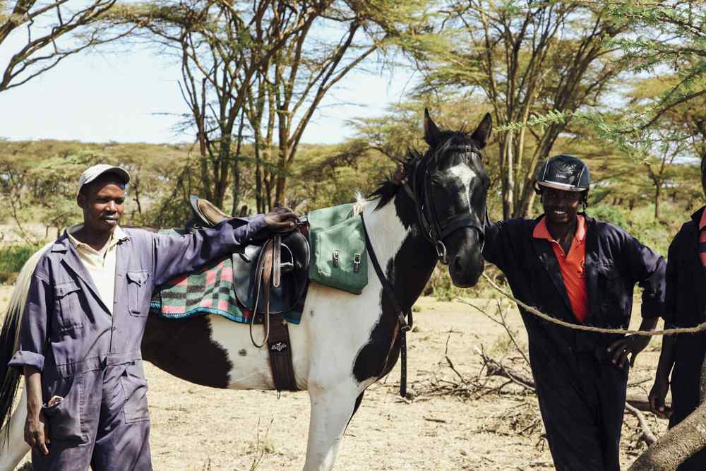 safari horse in kenya