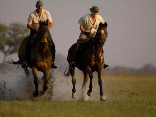 horse riding safari guides