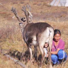 reindeer people mongolia