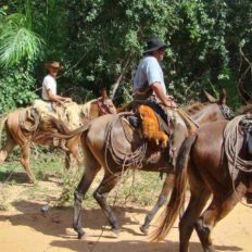 Horse riding in the Pantanal