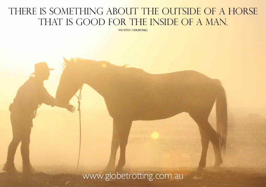 outside of a horse