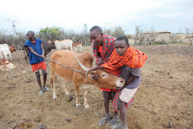 Horse riding holiday Kenya