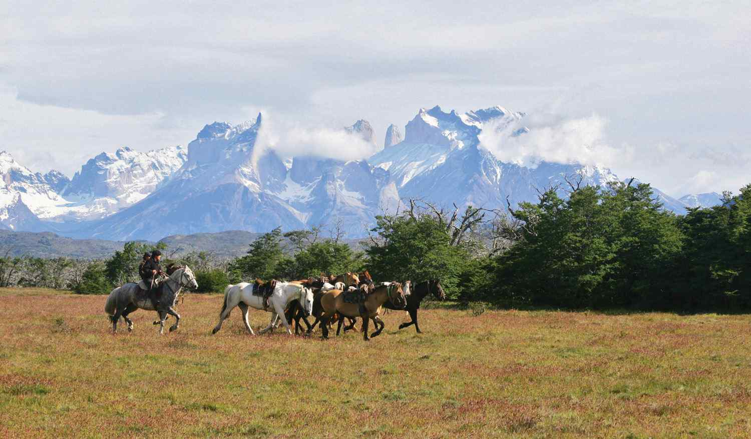 horses on mountain backdrop Horse riding holiday torres del paine, chile by globetrotting