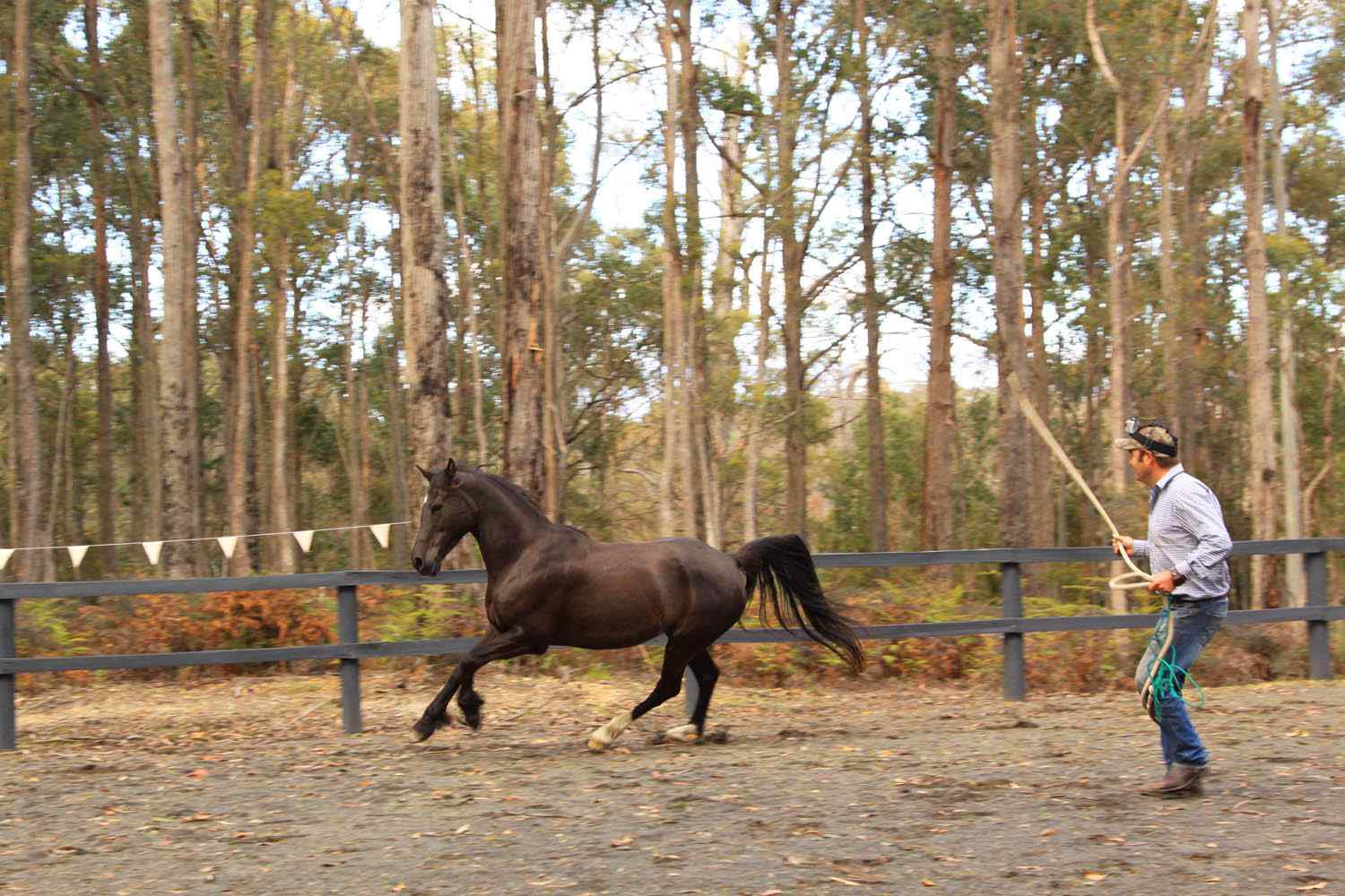 horse riding holiday tasmania