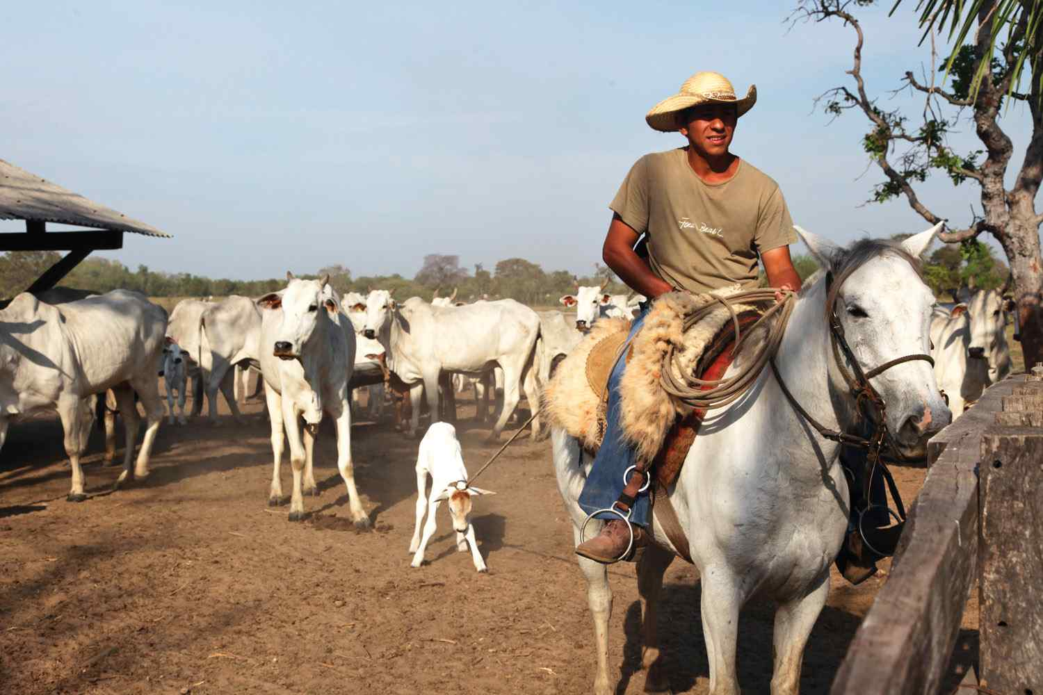 Horse riding in the Pantanal Brazil