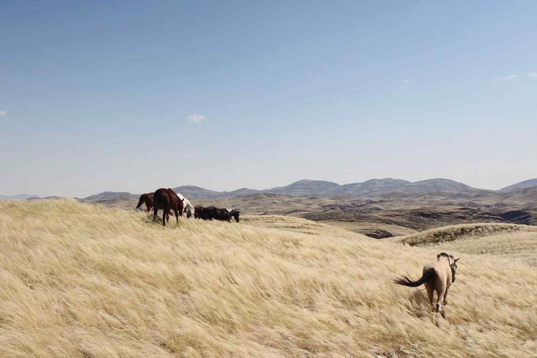 namibia horse riding holiday