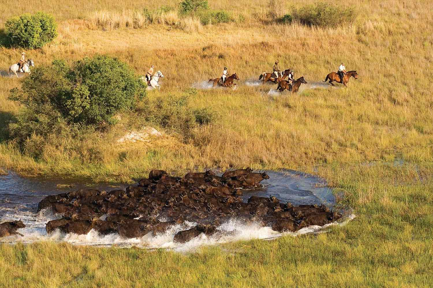 Horse riding safari okavango delta